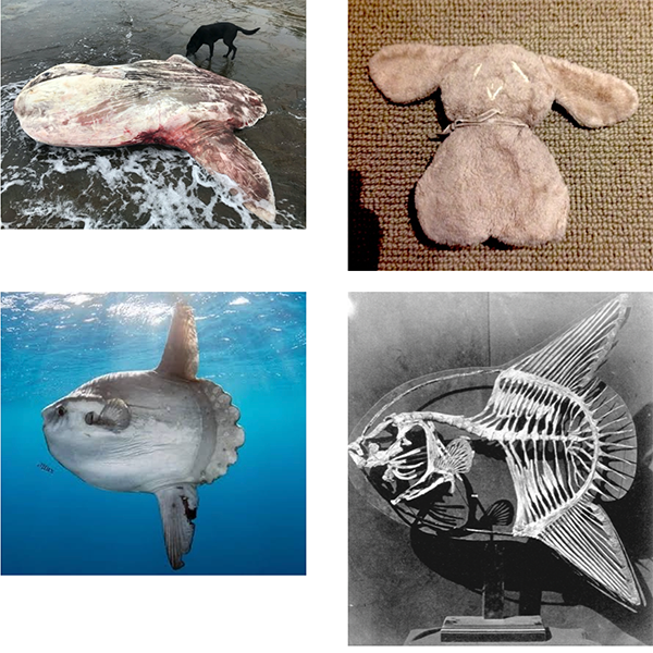 Intersecting-Innocences-Sunfish-meets-Flat-Teddy